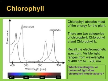 Photosynthesis- PowerPoint Notes