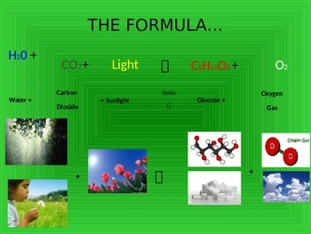 Photosynthesis PPT
