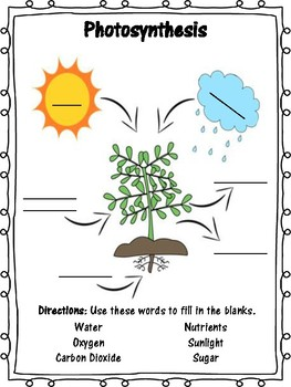 Photosynthesis Packet