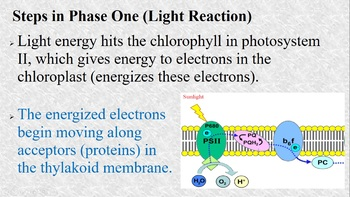 Photosynthesis Phase I Powerpoint