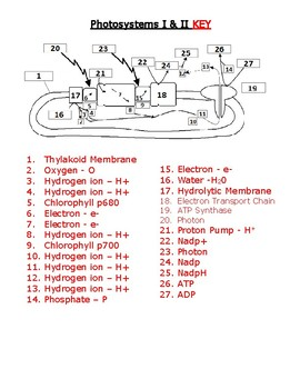Photosynthesis Photosystems Handout Worksheet and Quiz