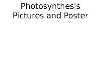 Photosynthesis Poster