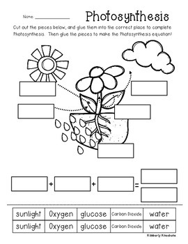 Photosynthesis Poster/Classroom Display and Worksheet by Beached Bum ...