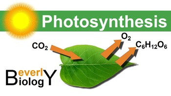Photosynthesis PowerPoint (updated)