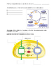 Photosynthesis PowerPoint Notes