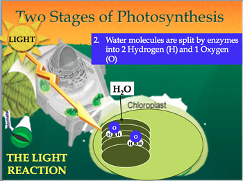 Photosynthesis PowerPoint and Fill-In-The-Blank Notes