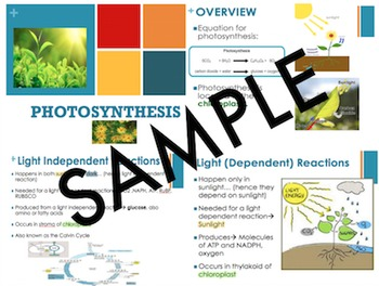 Photosynthesis Powerpoint- Biology