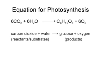 Photosynthesis Presentation