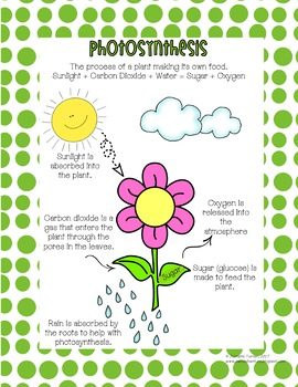 Photosynthesis Process Poster Mini Pack