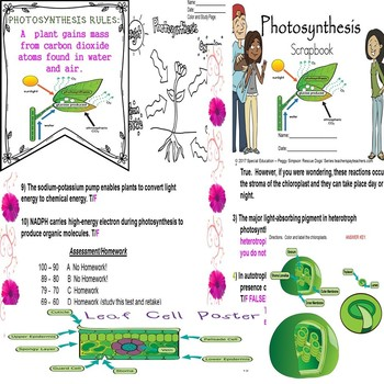 Photosynthesis Biology Life Science Quiz Special Education ELD
