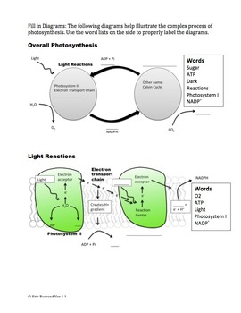 Photosynthesis Reactions Worksheet