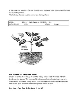 Photosynthesis Reading