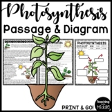 Photosynthesis Reading Comprehension Passage Worksheet for Science