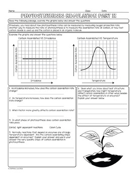 Photosynthesis Regulation Biology Homework Worksheets By Science