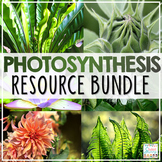 Photosynthesis Activities Resource Bundle | Photosynthesis