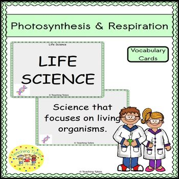 Photosynthesis Respiration Vocabulary Cards