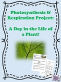 Photosynthesis & Respiration Project