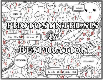 Photosynthesis- Respiration Seek and Find Science Doodle Page