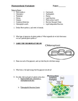 Photosynthesis Review Worksheet by Mr Johnsons Science Materials