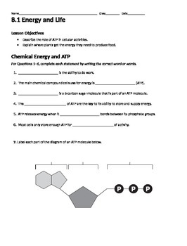 Photosynthesis Review Worksheet Packet