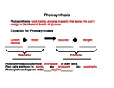 Photosynthesis Review sheet