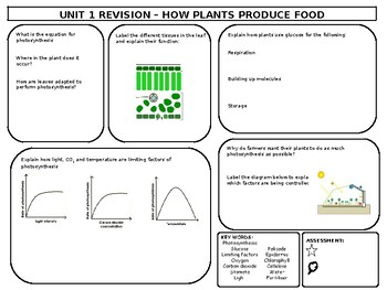 Photosynthesis Revision Mat