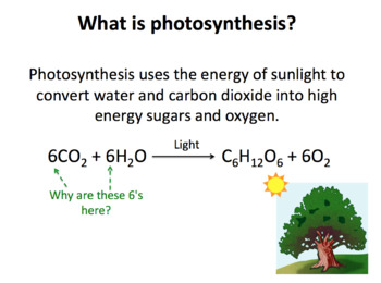 Photosynthesis SMART notebook presentation