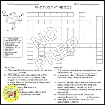 Photosynthesis Crossword Puzzle By Teaching Tykes Tpt