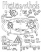 Photosynthesis Ver1 Sketch Notes Doodle Notes W/Teacher's Guide & Student Notes!