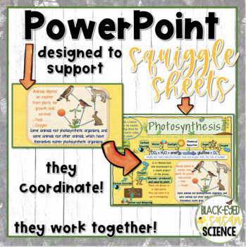 Photosynthesis Squiggle Sheets---POWER POINT