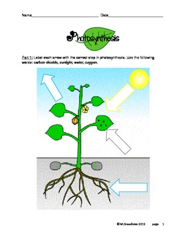Photosynthesis Steps Diagram and Worksheet