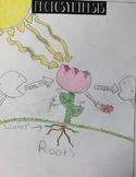 Photosynthesis Student Created Diagram