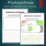 Photosynthesis Summary and Picture Project