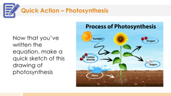 Photosynthesis - Supplemental Lesson - No Lab
