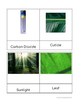 Photosynthesis Terms Cards