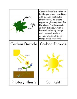 Photosynthesis - Three Part Cards