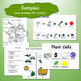 Photosynthesis Unit for Special Education COLOR VERSION
