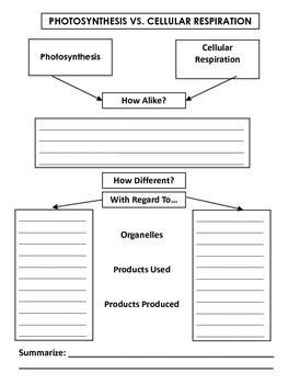 Photosynthesis vs cellular respiration venn diagram by inabinets photosynthesis vs cellular respiration venn diagram ccuart Choice Image
