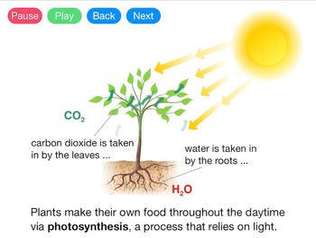 Photosynthesis (Video)