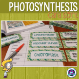 Photosynthesis Vocabulary Card Sort