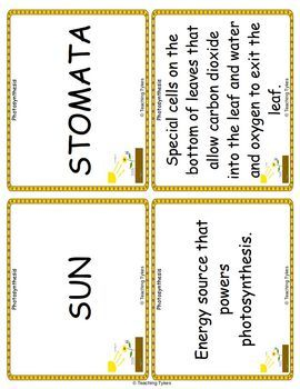 Photosynthesis Vocabulary Cards