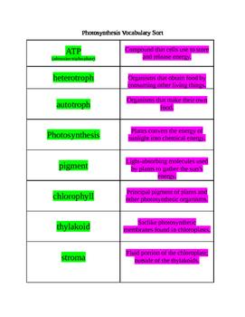 Photosynthesis Vocabulary Sort