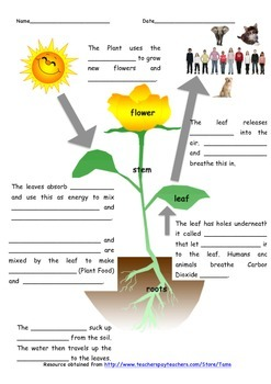 photosynthesis worksheet by tams teachers pay teachers. Black Bedroom Furniture Sets. Home Design Ideas