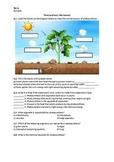 Photosynthesis - Worksheet