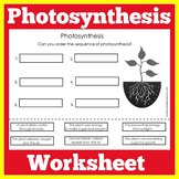 Photosynthesis Worksheet Activity