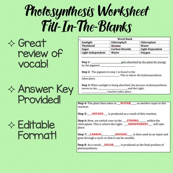 Photosynthesis Worksheet Fill In the Blanks by Science with Shmouni