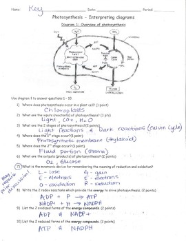 Photosynthesis Worksheet NGSS HS-LS1-5