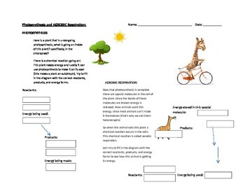 Photosynthesis and Aerobic Cellular Respiration (Reactant/Product/Energy Trans)