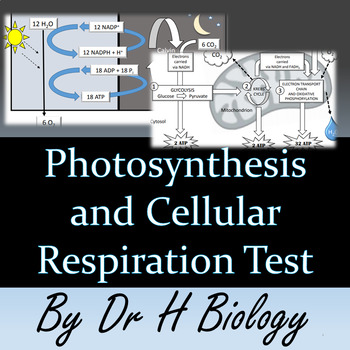 Photosynthesis and Cell Respiration Test