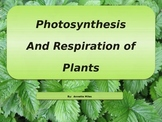 Photosynthesis and Cellular Respiration Powerpoint